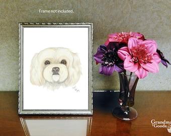 Hand Drawn Pet Portraits • Artist Print • Color Pencil Illustration • White Peekapoo Print • Maltese Print • Shih tzu Art • Pet Portraiture