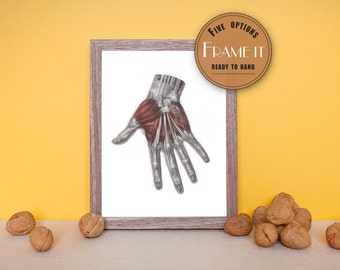 """Vintage illustration of muscles and tendons of the back of the hand - fine art print, art of anatomy, 8""""x10"""" ; 11""""x14"""", FREE SHIPPING - 176"""