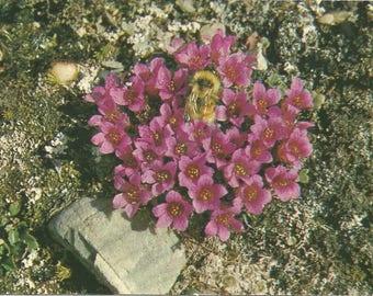 Vintage 1980s Postcard Cape Bathurst Ellesmere Island Nunavut NWT Canada Purple Saxifrage Bumble Bee Flora Card Photochrome Postmarked