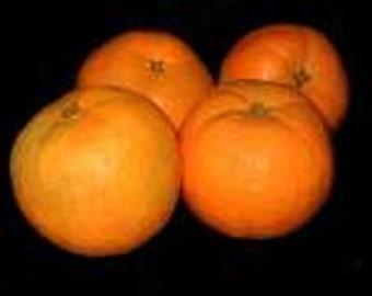Primitive Folk Art Oranges