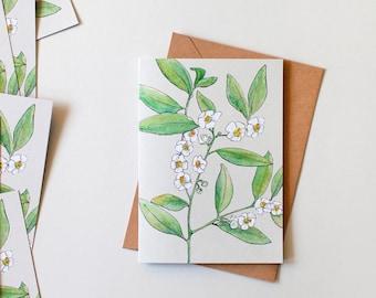 Tea-Leaf Camellia Illustrated Blank Greeting Card