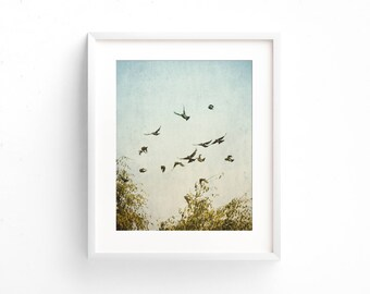 """nature photography, birds in flight, large art, large wall art, large art print, modern, contemporary, farmhouse art - """"A Feeling of Change"""""""