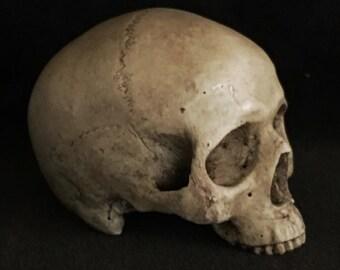 Small human skull replica