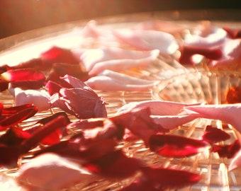 Rose and Strawberry Scrub