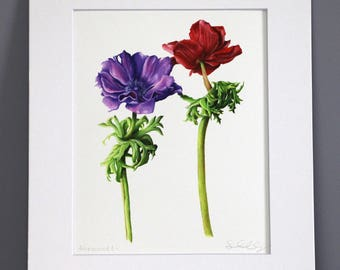 Anemones, Botanical Art Print