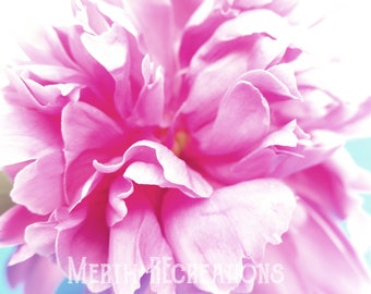 Pink Peonies Original Photo, Wall Art, Digital Download, Digital Background, Instant Download, Stock Photo