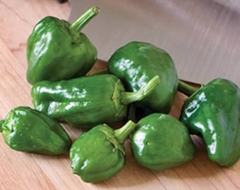 Padron Heirloom Hot Pepper Seeds Non-GMO Naturally Grown Open Pollinated Gardening