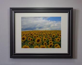 """8"""" x 10"""" Sunflower Field Photograph • Framed (10"""" x 13"""") & Matted"""