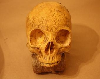 Soft human skull replica