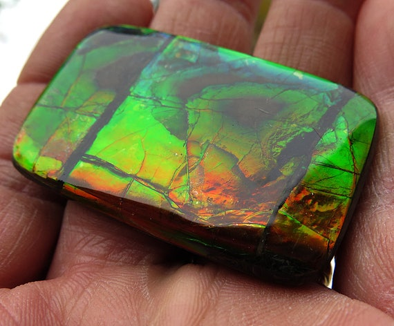 A large 2 inch across Wildly colorful Ammolite. Mined from the City of Lethbridge, Alberta, Canada. Bear Paw Deposit