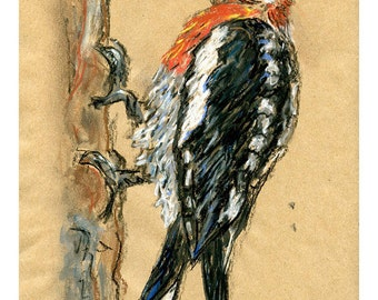 5 x 7 print Specht - Vogel Kunst Mischtechnik zeichnen