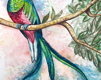 """Quetzal 11""""x14"""" Giclee Print on Watercolor Paper"""