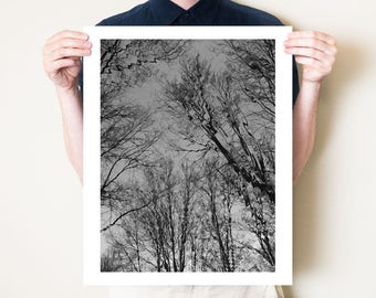 Black and white trees photography, monochromatic gothic decor. Eerie dark woodland fairy tale art. Photo print in 5x7, 8x10, 11x14 to 30x40