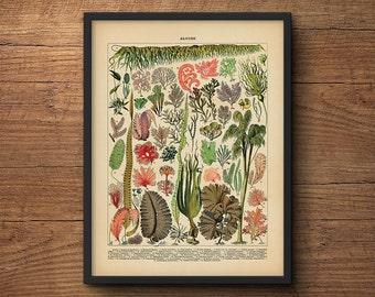 Seaweed Algae Print, Botanical Wall Art, Scientific Illustration, Coastal Art, Vintage Art, Botanical, Coastal Prints, Large Art, Beach Art
