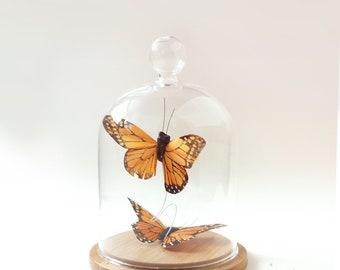 Glass bell jar, Cloche display, Wooden base and clear glass jar, Glass display, Unique wedding decor, Taxidermy display, Glass terrarium