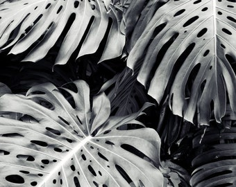 "Black and White Tropical Wall Art, Monstera Plant Leaves, Living Room Decor, Black Gray Botanical Wall Art Print ""Monstera"""