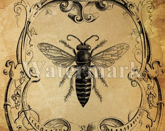 Queen Bee instant Digital Download Printable Bee Art Print Collage Antique Print Transfer Pillow Paper Supply  Save The Bees