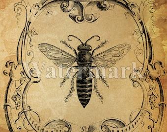 Queen Bee sofortigen digitalen Download druckbare Biene Kunstdruck Collage antike Druck übertragen Kissen Papier liefern Speichern der Bienen