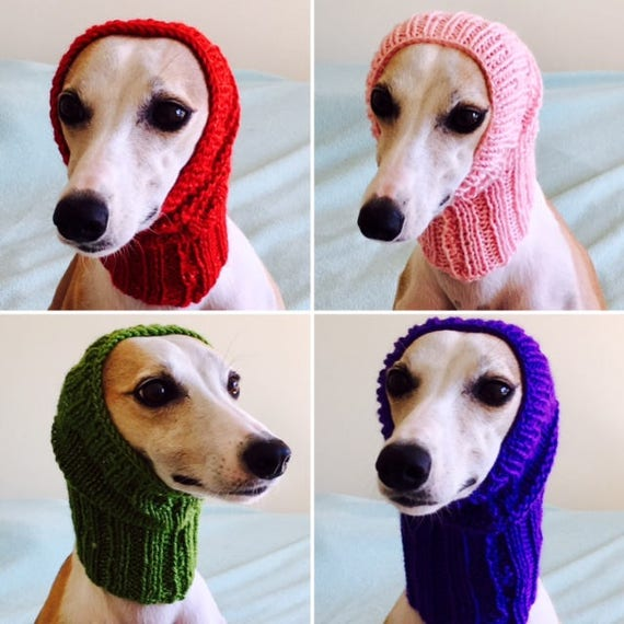 tricoter un snood pour chien