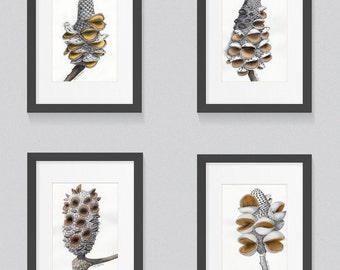 Banksia Seed Pod Drawings - Set of Four