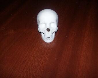 1/6 Scale 12 inch skull