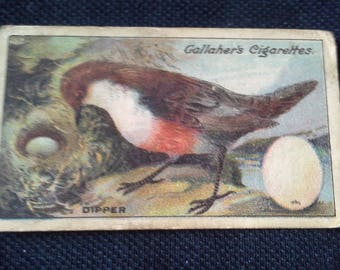 Gallaher Cigarettes Picture Card Birds Nests And Eggs Series No97 Dipper