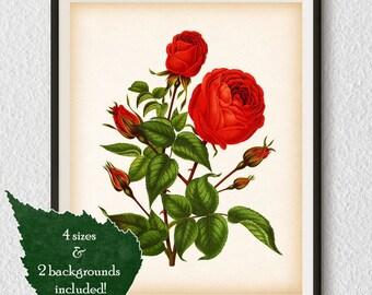 Rose wall art, Digital download, Vintage botanical print, Antique art, Rose printable, Botanical illustration, Rose pictures, 8x10, 11x14
