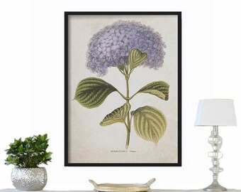 Hydrangea Botanical Print -  Large Print - Vintage Print - Wall Hanging - Farmhouse Decor - Rustic Decor - Vintage Print - French Country