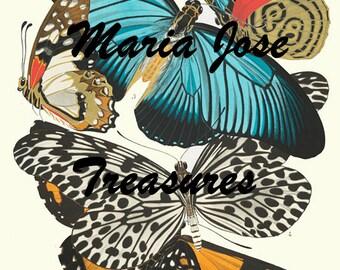 Vintage Butterflies Illustrations - Digital Download