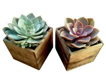Urban Living Wood Box Succulent - wedding centerpiece, table centerpiece, desk decor, succulent planter, desk accessories, succulent gifts