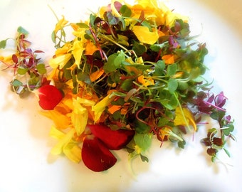 GOURMET CHEFS SALAD Mix Shoots and Leaves, Micro Green Edible Flower Petals Large Container