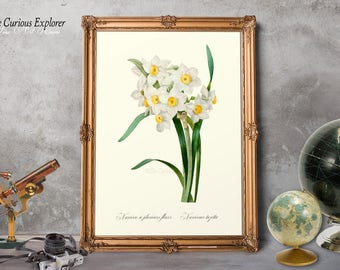 Narcissus Art Print, Flower Wife Gift, Entryway Art Prints, Bridesmaid Prints, Botany Art Poster, Engagement Gift Art - E11_37