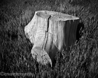 Stump: Fine Arts/Black & White Photograph