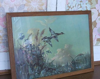Vintage Vernon Ward Bird Picture/Print 'Flutter in the Reeds'