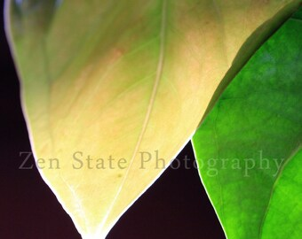 Leaf Photograph. Sensual Photography Print. Leaves Fine Art Print. Green and Yellow Unframed Art Print, Framed Photo, Canvas Gallery Print.