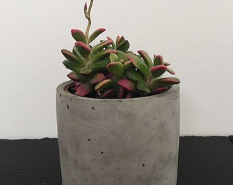 concrete, perfect for your cactus pot