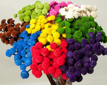 Dried Colored Floral Buttons | Colored Flowers | Straw Stem Flowers