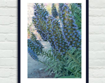 Blue flower photo print, blue green wall art coastal California plant large vertical artwork print, bedroom bathroom decor, Pride of Madeira