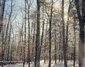 Beckoning Fine Art Print - sun streaming through a snowy forest