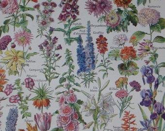 Original French vintage botanical print 'Fleurs' (FLOWERS) Adolphe Millot, Larousse Universel Published 1922