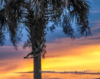 Palm Tree at Sunset - Photographic Print