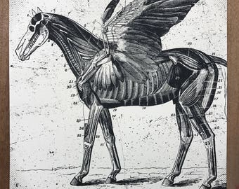 Pegasus Horse Anatomical Art Print