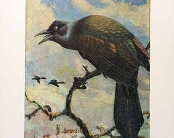 vintage 1930s Purple Grackle book illustration for framing