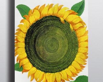Digital Download, Antique Sunflower, Printable Art, Instant Download, Sunflower Print, Art Print, Wall Art, Vintage Prints, Botanical Prints