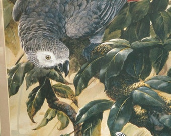 Vintage Art print Framed & Matted African Grey Parrot Hunting Bug - Wall Hanging Large Realistic Bird Art print.