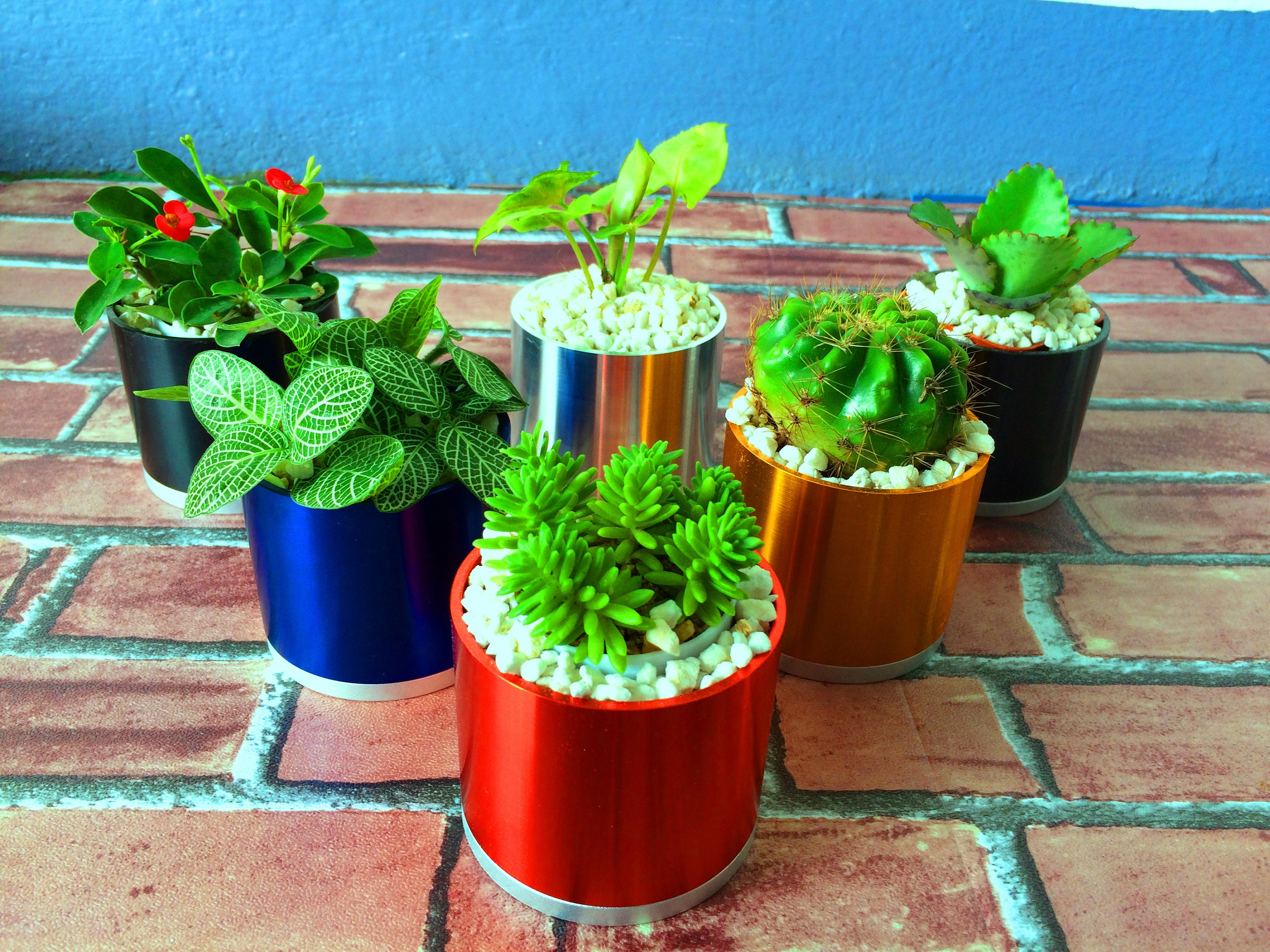 Colorful Garden Pots Colorful garden pots for plans cactus planter modern elegant design sold by tomorrowdecor workwithnaturefo