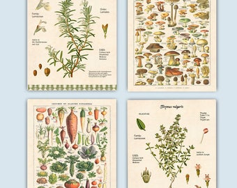 Kitchen art, Vegetables, Herbs print, Rosemary & Thyme, cooking herbs, botanicals, educational poster, Food decor,dining room decor, set 4