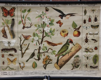 Pull down School Chart friends and enemies of plants  Litho