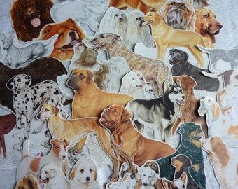 Lot vintage dog / vintage paper bundle / vintage ephemera