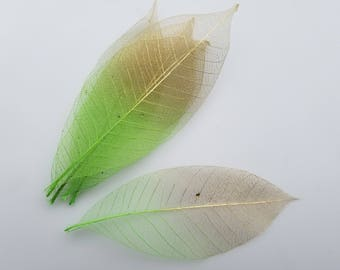 Bright green and gold skeleton leaves